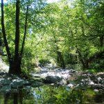 Els tresors del bosc de Montseny