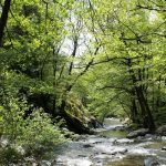 The treasures of Montseny forest