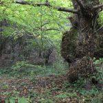 Treasures of the forest close to la Morera
